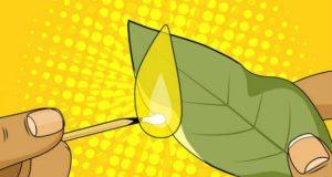 Нещата които се случват когато запалиш дафинов лист у дома