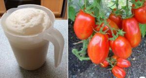 Краставиците подхранвам на 10 дни доматите - на 15