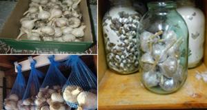 Съхранение на чесъна – направете го правилно
