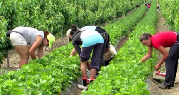 Изповедта на една гурбетчийка: Тръгнах си от Англия и цял живот ще съжалявам че не останах да бера ягоди там