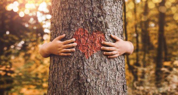 Дърветата лекуват но как? Виж твоето дърво според зодията