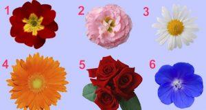 Бърз и интересен тест за жени: Избери едно цвете и виж какво казва то за твоята женственост!