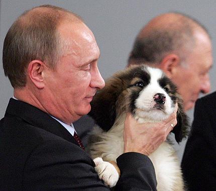 Владимир Путин овчарка