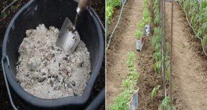 Градинари не изхвърляйте пепелта – използвайте я в градината!