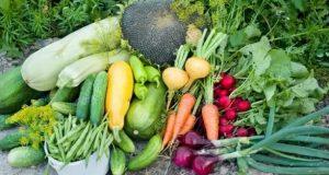 Градинарите разкриват как ефективно да оформите цветните лехи така че реколтата ви да е обилна!