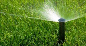 Как да поливаме градината в жегите за да не уморим растенията - 7 безценни съвета