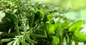 Тези 5 билки ще ви помогнат да регулирате хормоните си