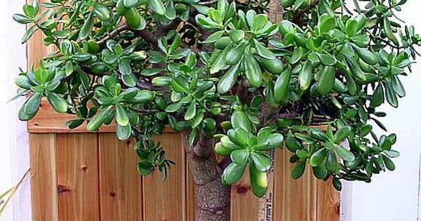 """""""Дървото на живота"""" – един безценен лечител"""
