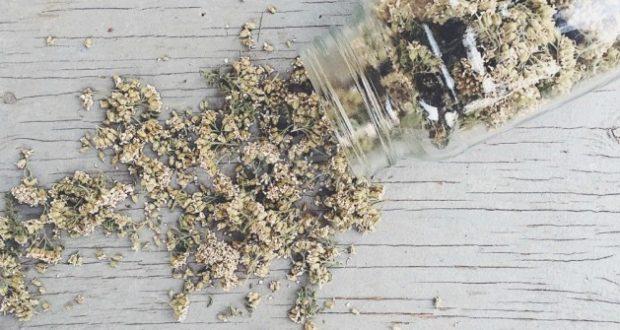 Златна българска билка-Всеки я знае но малко я ползват въпреки че лекува 100 болести
